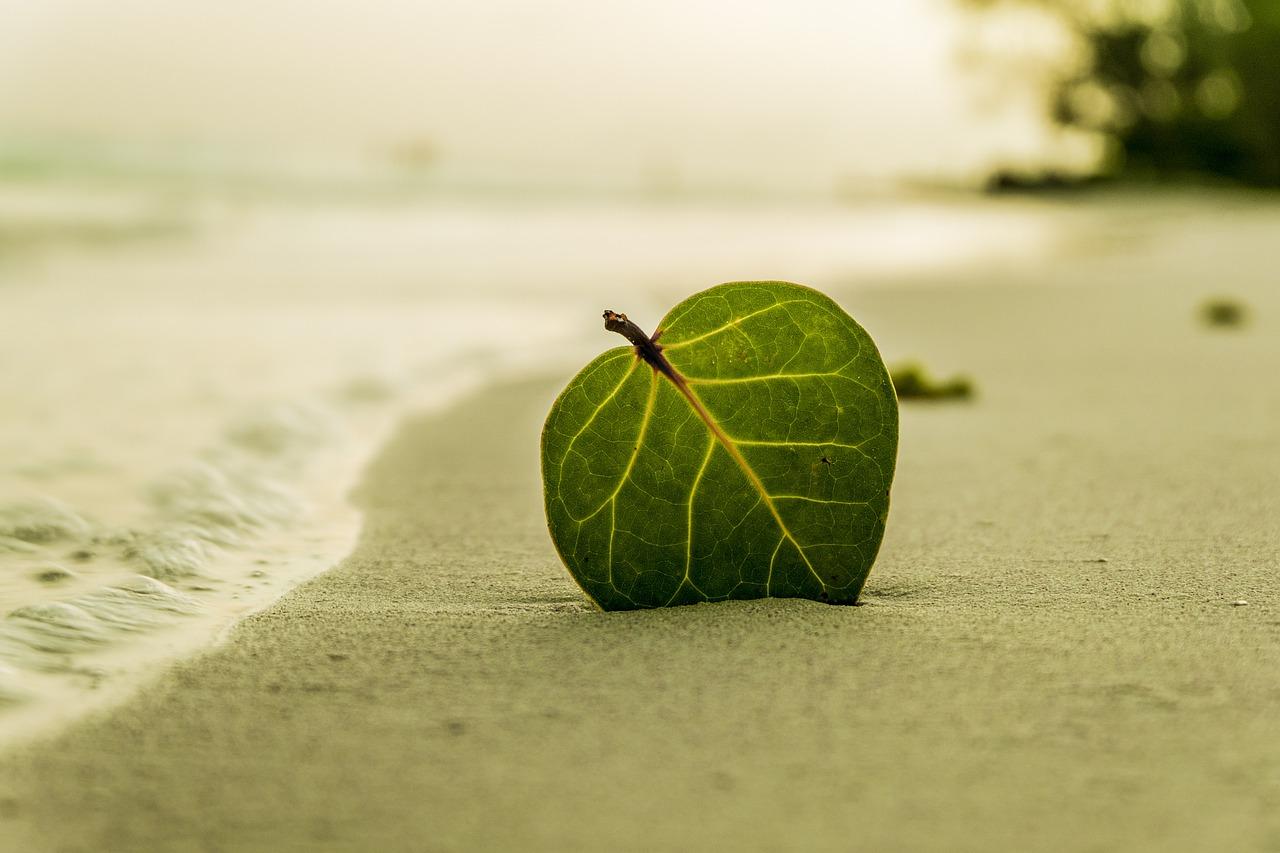 El granito de arena
