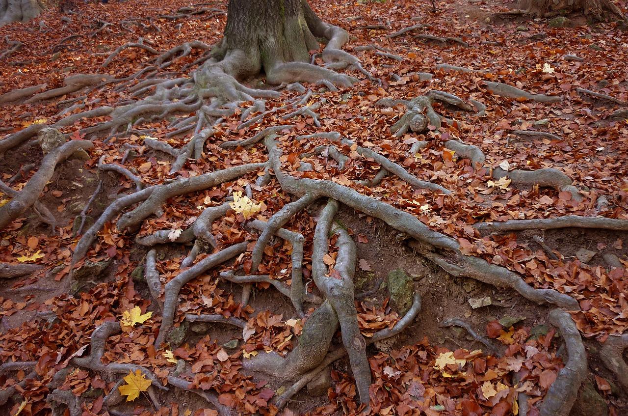 Las raíces bíblicas