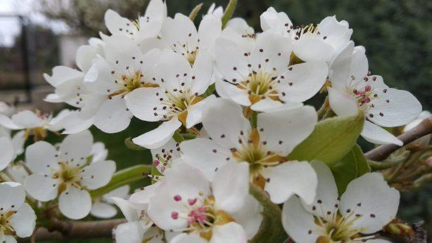 Flores de Osera